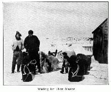 Eskimo Dogs in Labrador - click to enlarge it