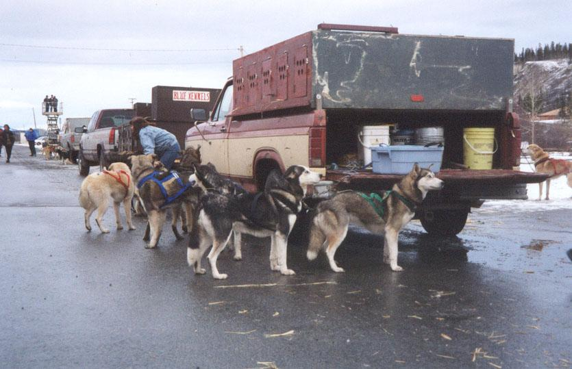 Photo of the 2000 Yukon Quest World's Strongest Sled Dog Team